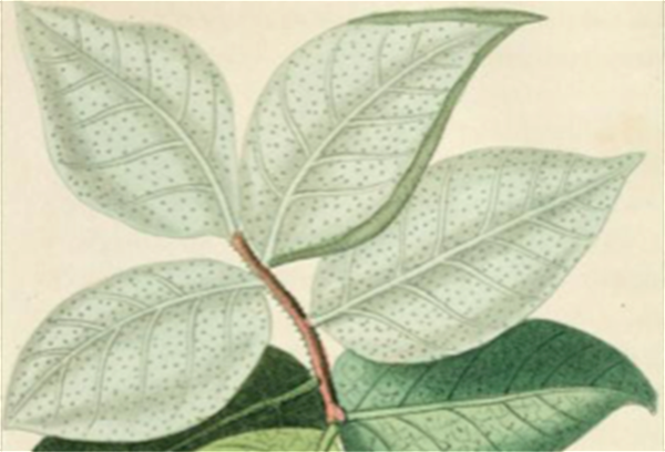 Plants and Empire Colonial Bioprospecting in the Atlantic World