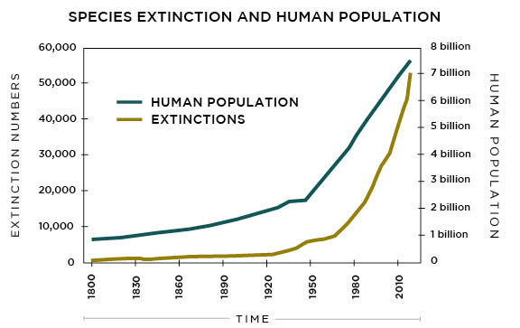 Species Extinction and Human Population2