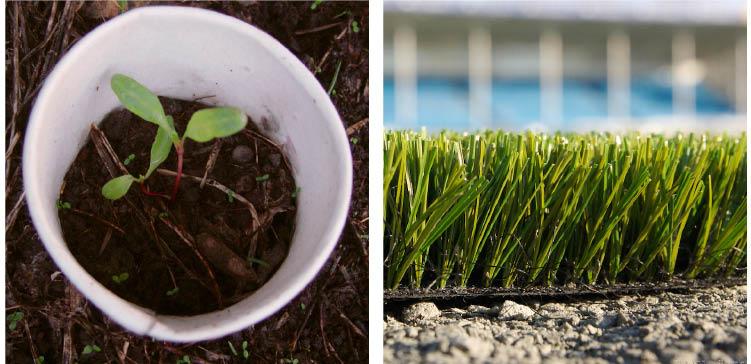 Seedlings and turf