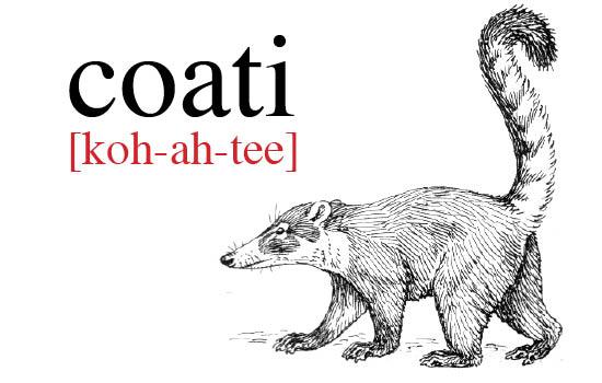 Coati2