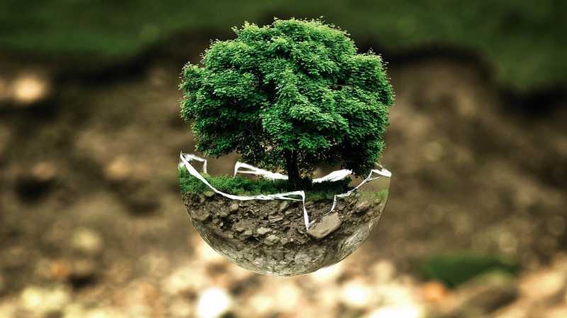 Miniature  tree in half a sphere